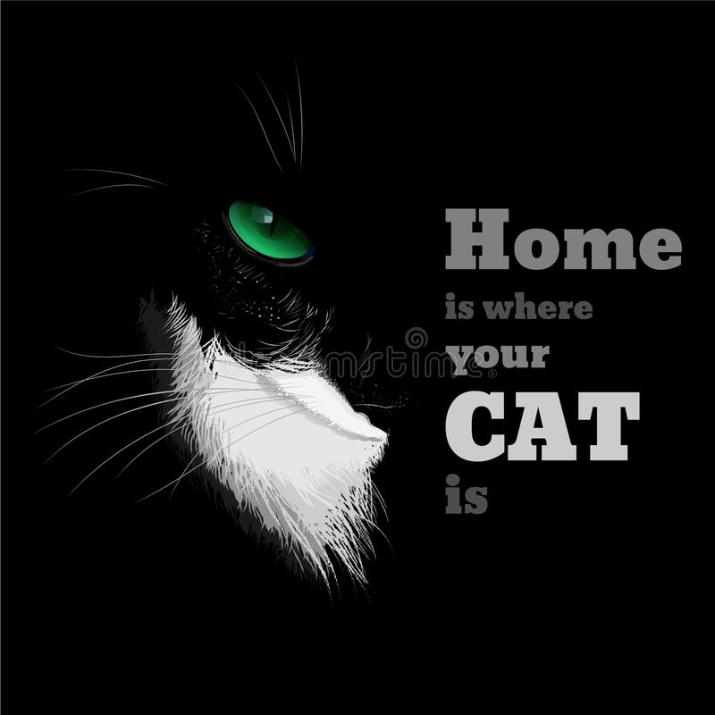 Black cat with a white chest and green eye. Black cat with a white chest green eye and black background vector illustration
