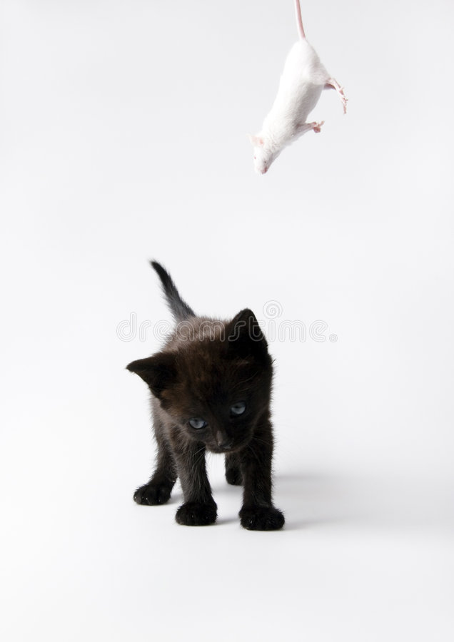 Black cat & White mouse royalty free stock images