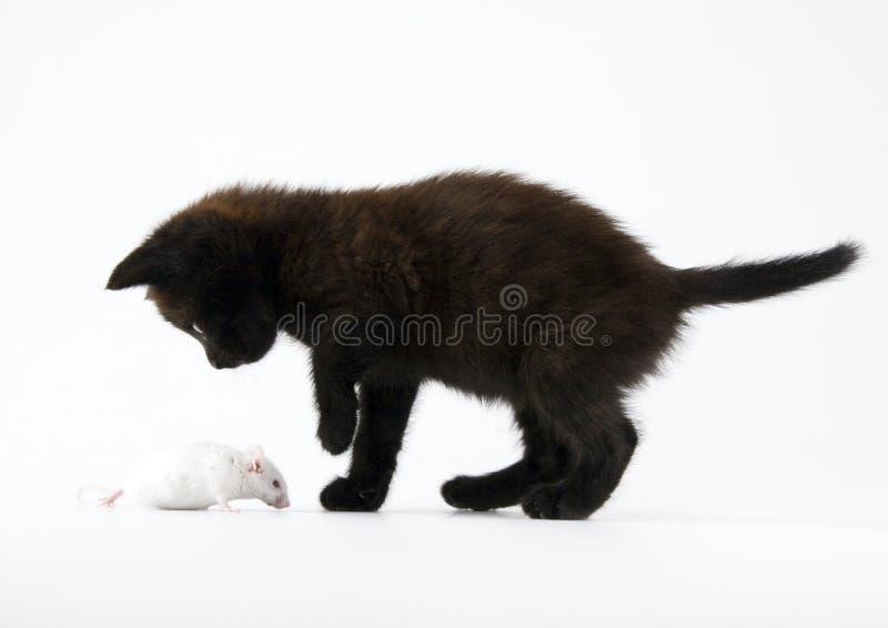 Black cat & White mouse royalty free stock photo