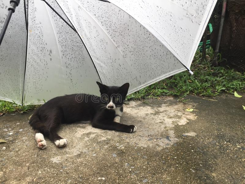 the black cat and a white umbrella stock photos