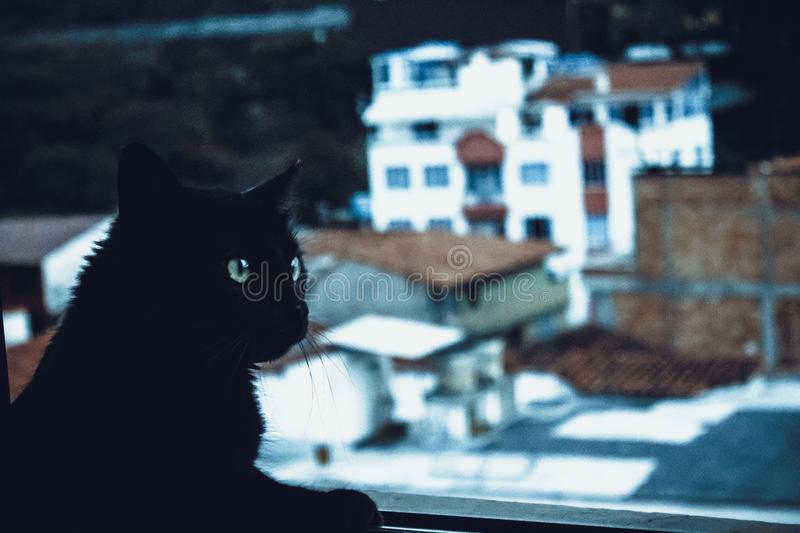 Black Cat Beside Window stock photo