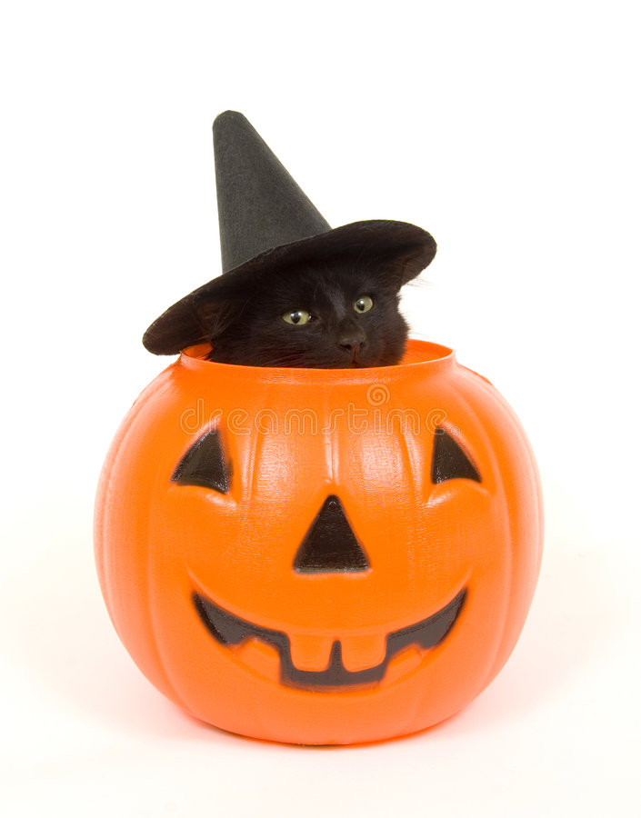 Black cat with witch hat in jack o lantern. A black cat with a witch hat on peeks out of a plastic jack o lantern royalty free stock photo