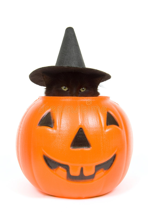 Black cat with witch hat in jack o lantern. A black cat with a witch hat on peeks out of a plastic jack o lantern royalty free stock images