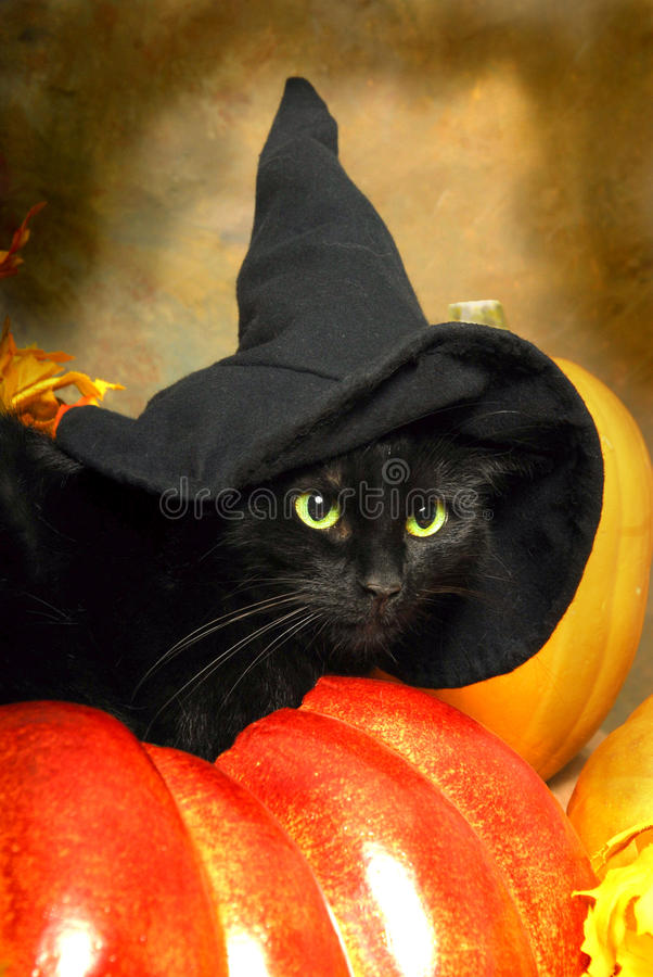 Black Cat Witch. A black cat wears a black witch's hat royalty free stock photos