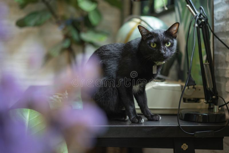 Black cat on wooden table stock photo