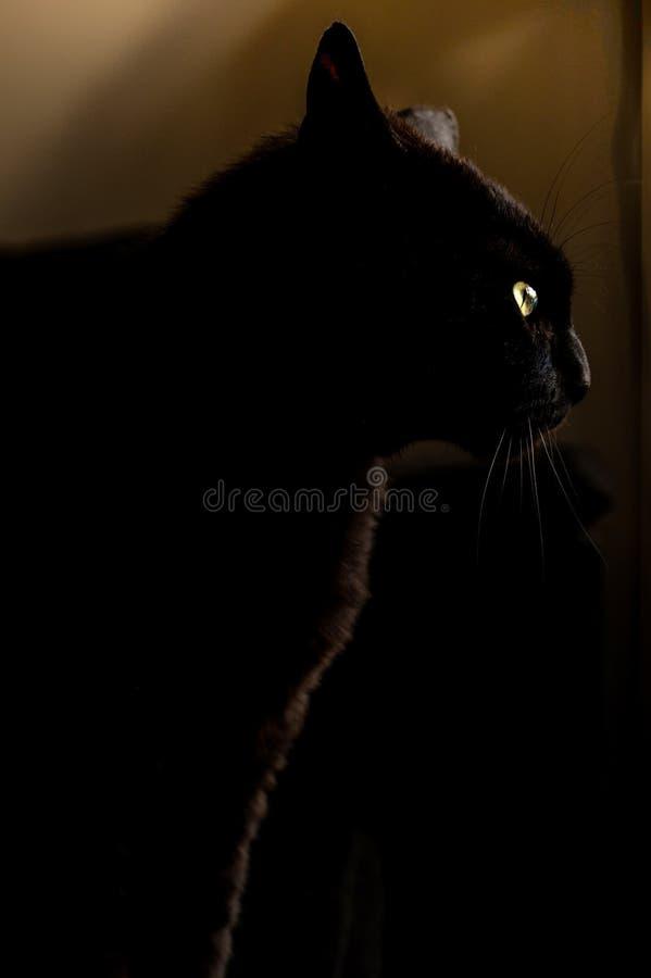 Black Cat With Yellow Eyes Free Public Domain Cc0 Image