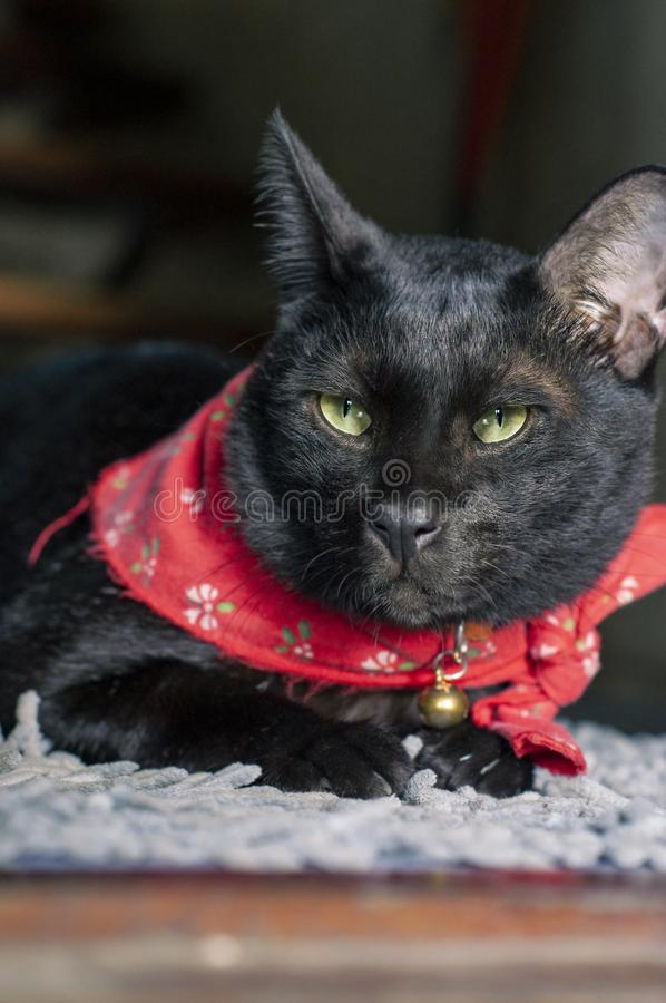 Black cat with yellow eyes lying on white doormat and looking to the camera. stock photography