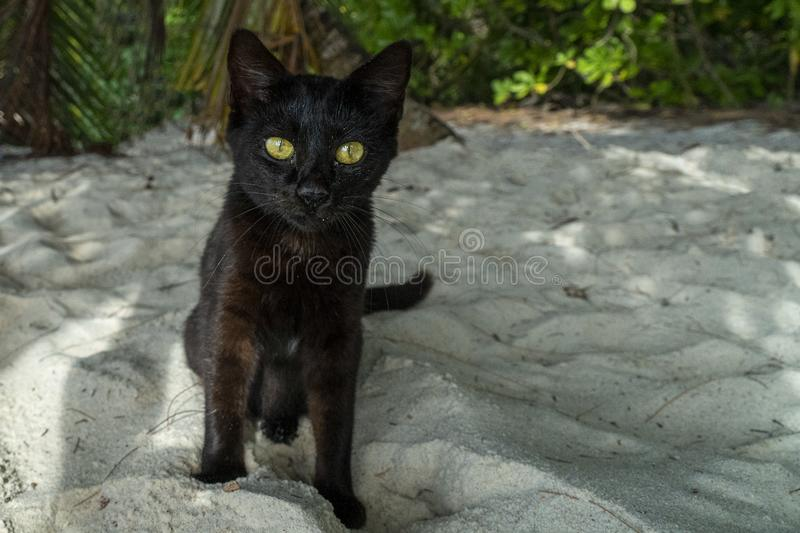 Black cat yellow eyes on the sandy beach. Looking at you royalty free stock photo