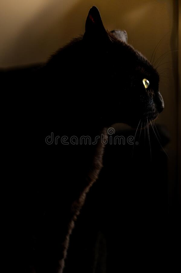 Black cat with yellow eyes royalty free stock images
