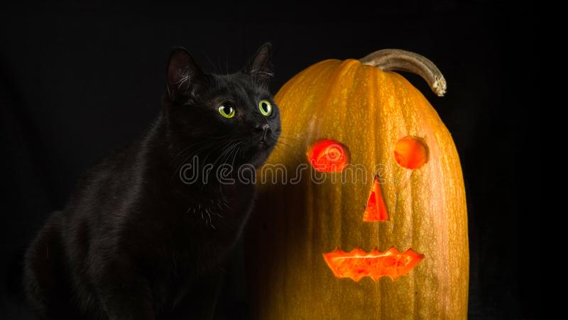 Black cat with yellow eyes sits next to Jack-o`-lantern. On a black background royalty free stock photography