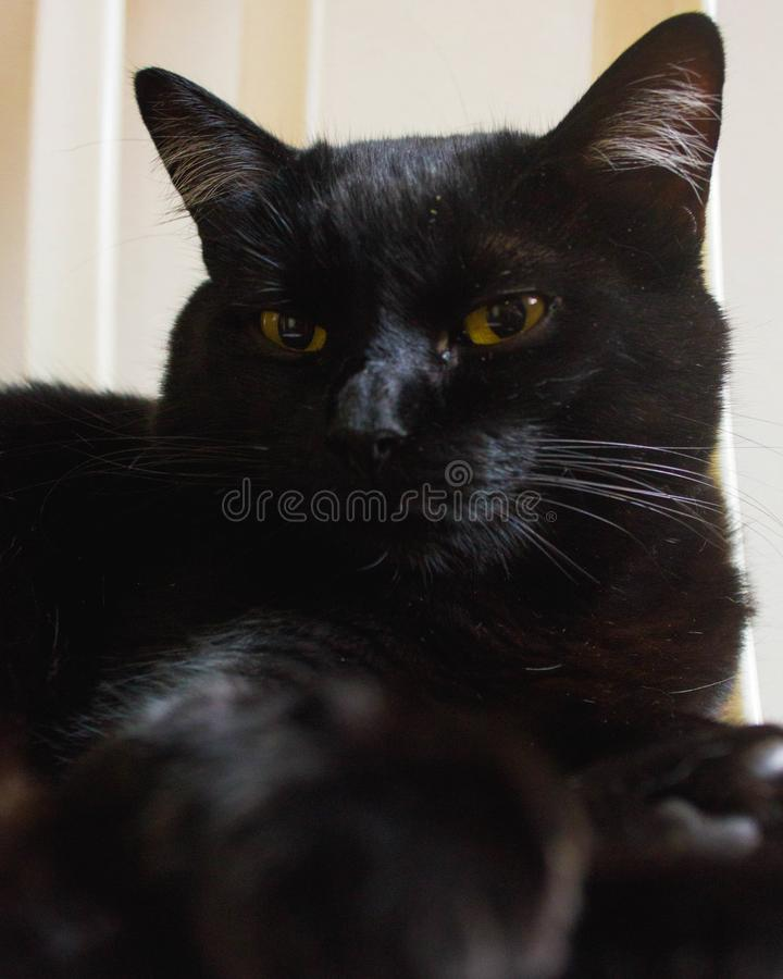 Black cat with yellow eyes sleeping. Peacefully in the afternoon stock images