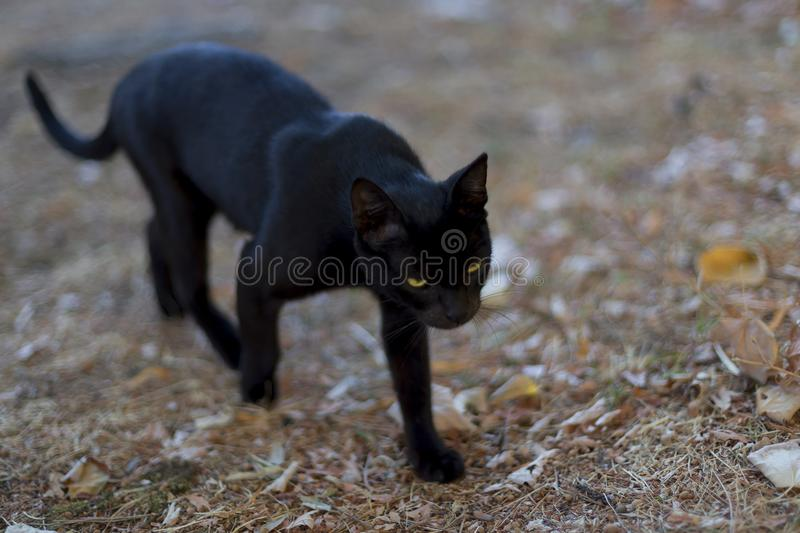 Cat Walking Down The Street Stock Image Image Of History