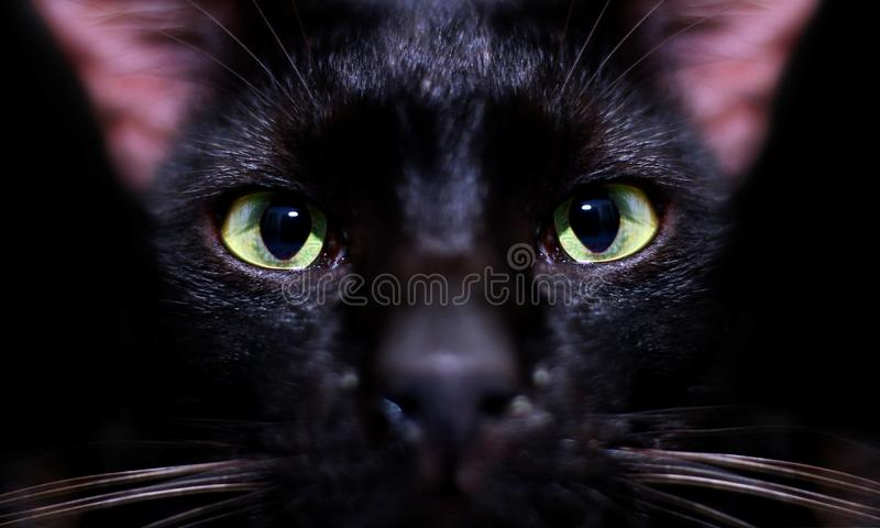 Black cats eye staring over black. Background stock photos