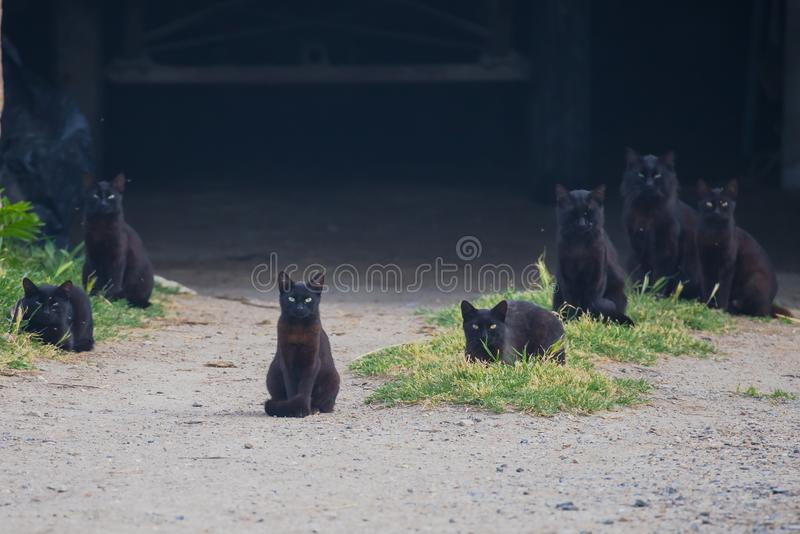 Black cats. In front of a barn stock images