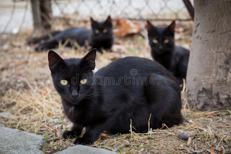 Black Cats. On the street royalty free stock photos
