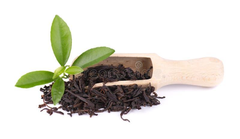Black Ceylon tea with soursop, isolated on white background. royalty free stock photo