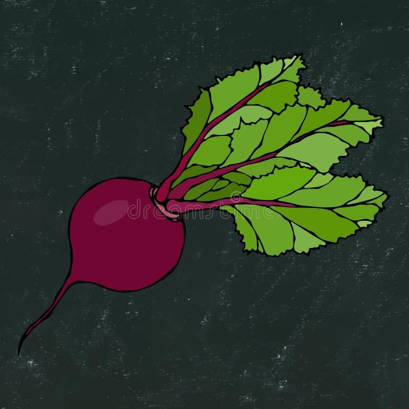 Black Chalk Board. Ripe Beet. Beetroot with Top Leaves. Fresh Vegetable Salad. Hand Drawn Vector Illustration. Savoyar Doodle Styl. E stock illustration