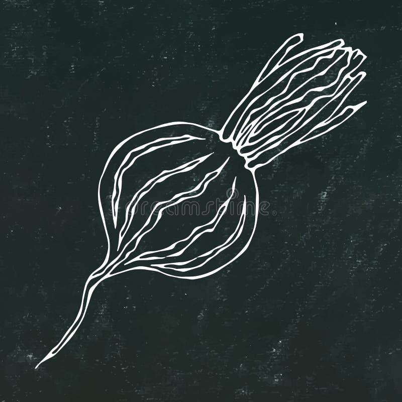 Black Chalk Board. Ripe Beet - Half of Beetroot, Cut Beet Slices. Fresh Vegetable Salad. Hand Drawn Vector Illustration. Savoyar D. Oodle Style stock illustration