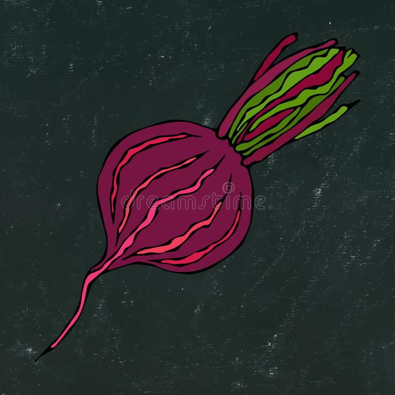 Black Chalk Board. Ripe Beet - Half of Beetroot, Cut Beet Slices. Fresh Vegetable Salad. Hand Drawn Vector Illustration. Savoyar D. Oodle Style royalty free illustration