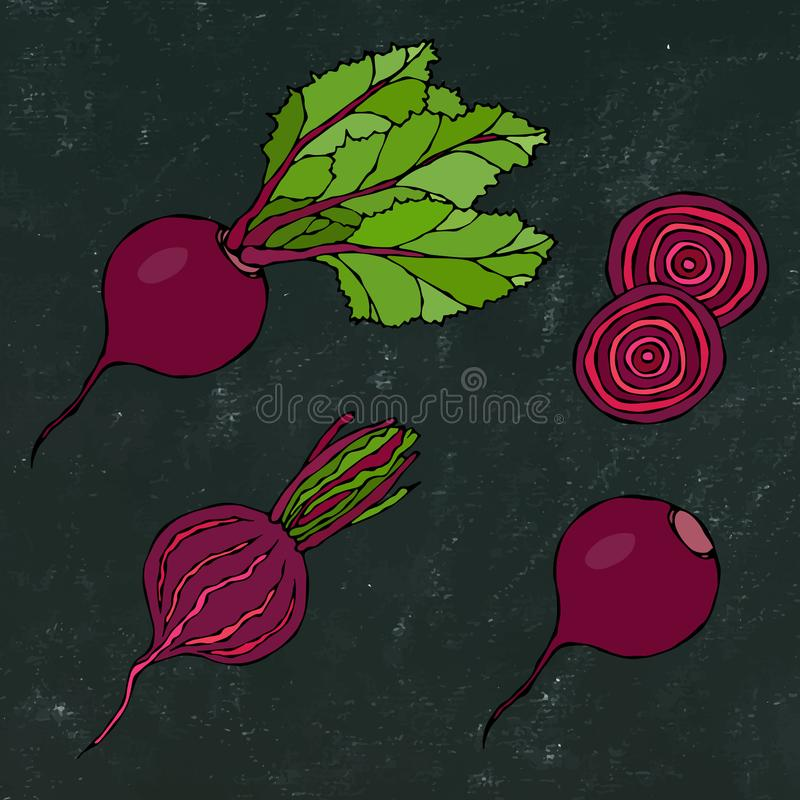 Black Chalk Board. Set of Beet - Beetroot with Top Leaves and Half of Beet, Beet Without Leaves, Cut Beet Round Slices. Fresh Vege. Table Salad. Hand Drawn royalty free illustration