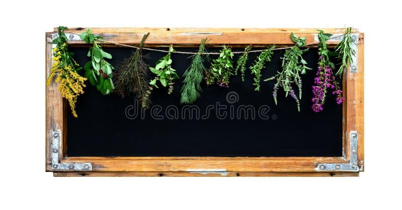 Black chalkboard with herbs. stock photo