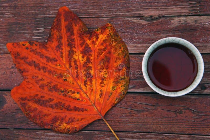 Black Chinese Tea Autumn garden leafs stock photo