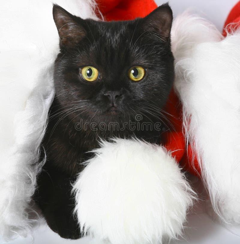 Free Black Christmas Kitten. Royalty Free Stock Photography - 11557927