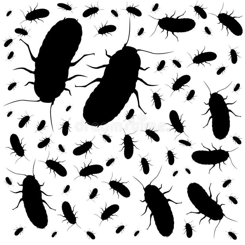 Black cockroaches royalty free stock images