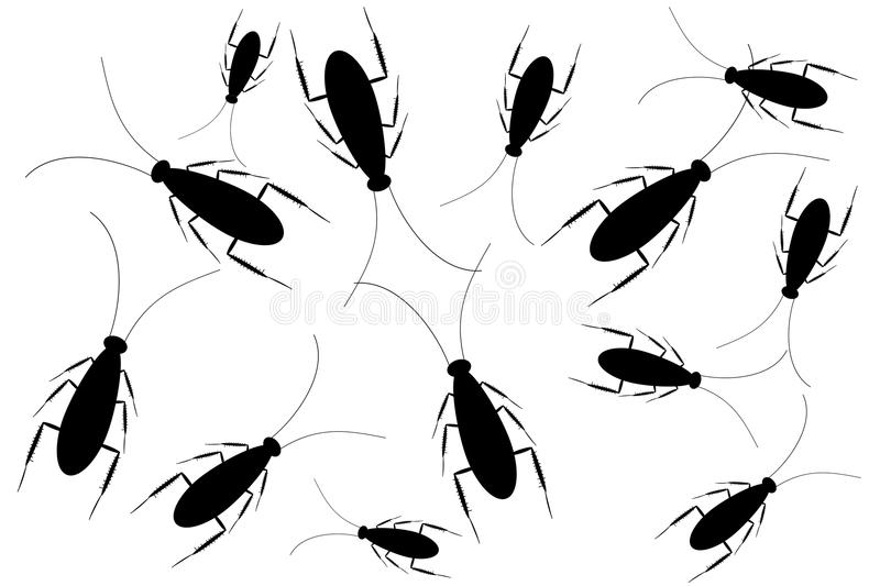 Download Black cockroaches on white stock vector. Image of illustration - 20321215