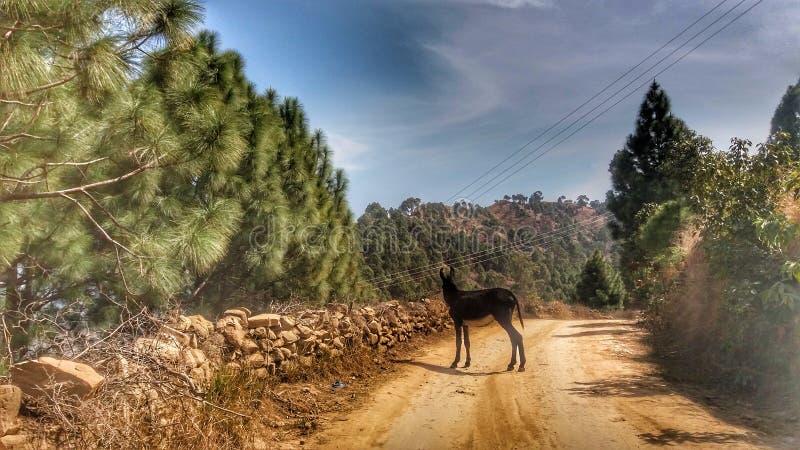 A black colour donkey stock photos
