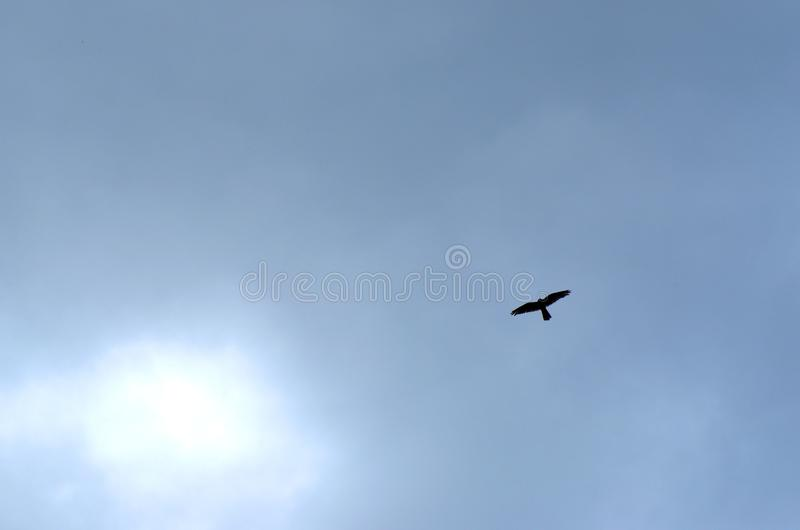 Black contour of single bird flying on cloudy sky. Bird fly on the blue sky royalty free stock image