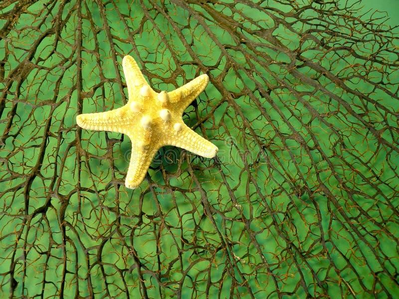 Black coral and starfish royalty free stock photo