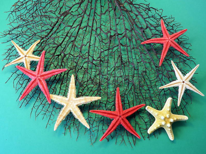 Black coral and starfishes stock photos