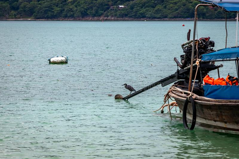 Black crane fishing at a beach in Phi Phi Island. Food chain.  royalty free stock photos