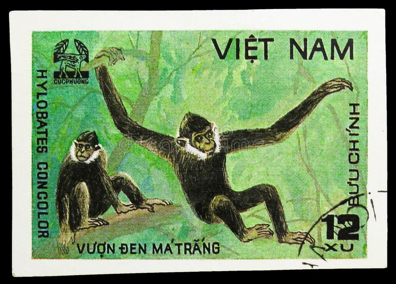 Black Crested Gibbon (Hylobates concolor), Animals from Cuc Phuona Nati Forest serie, circa 1981. MOSCOW, RUSSIA - SEPTEMBER 26, 2018: A stamp printed in Vietnam royalty free stock images