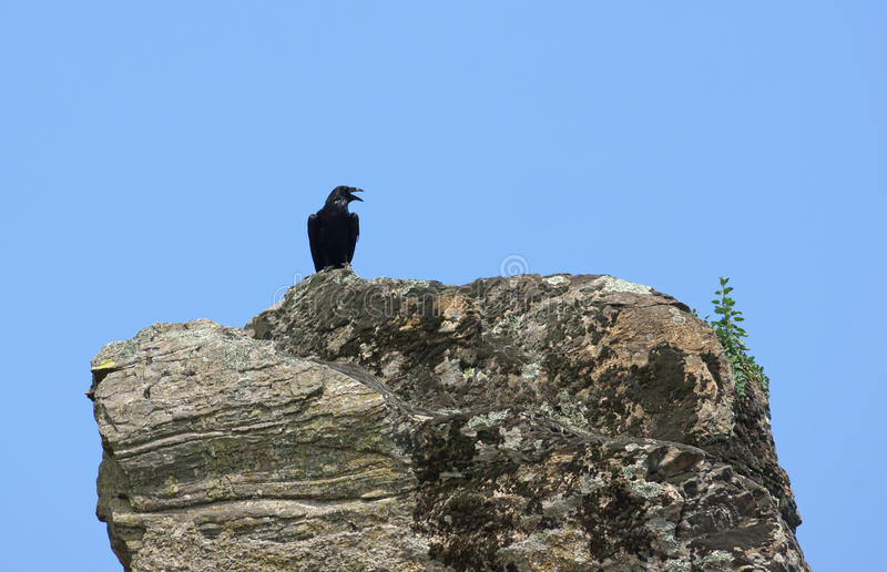 Download Black crow stock photo. Image of cliff, blue, predator - 27322886