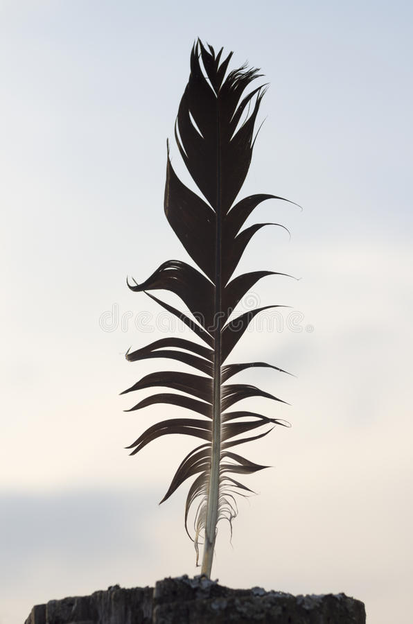 Free Black Crow Feather Stock Photography - 45351422