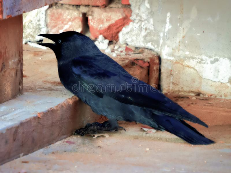 Black crow in a lost place royalty free stock photography