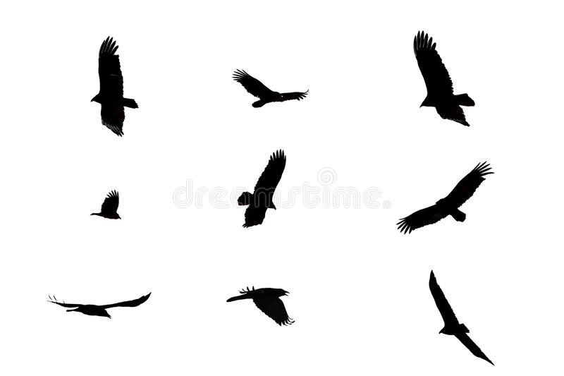 Download Black crows. stock image. Image of halloween, silhouette - 54568779