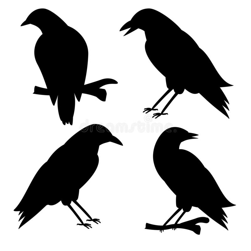 Black crows on a white background. Halloweens vector illustrations. royalty free stock photos