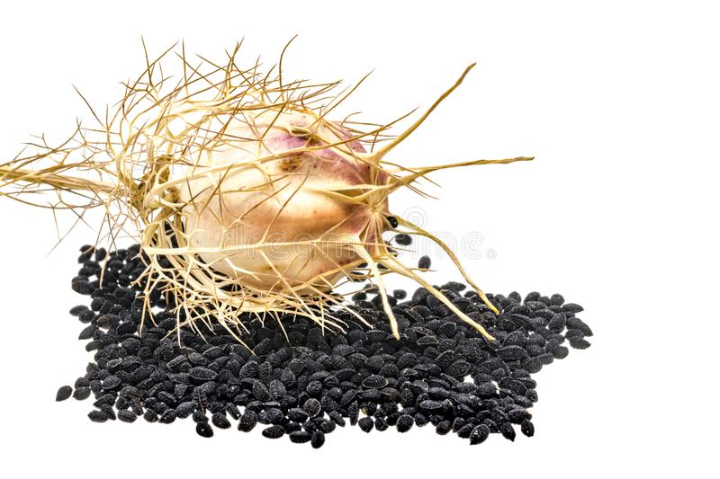 Black cumin with seed pods and leaves stock image