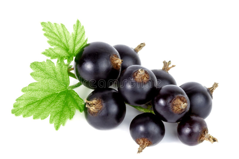 Black currant. royalty free stock images