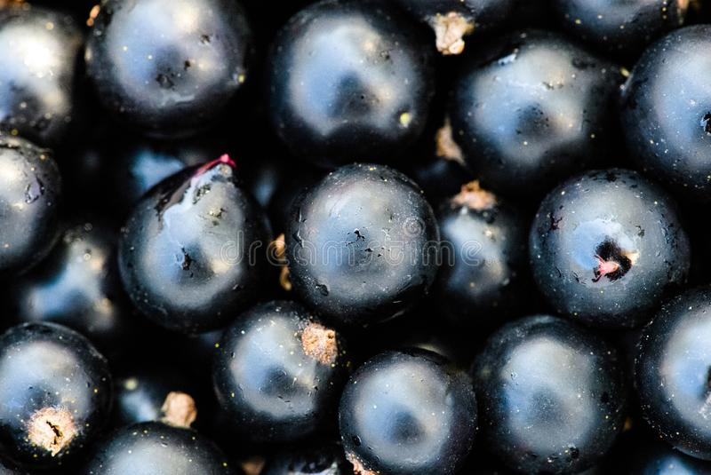 Black currant. Background, berries, berry, blackberry, blackcurrant, blackcurrants, bowl, branch, closeup, dessert, diet, drop, food, fresh, freshness, fruit royalty free stock photography