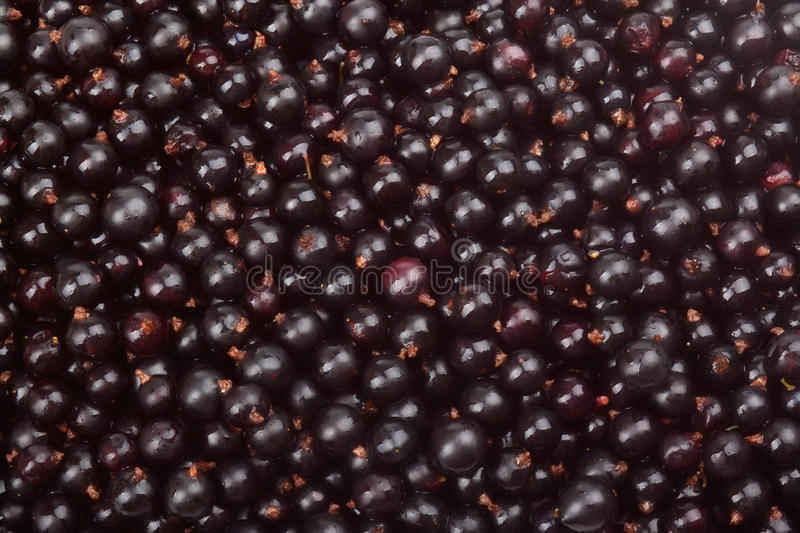 Download Black currant stock photo. Image of gourmet, healthy - 25624012