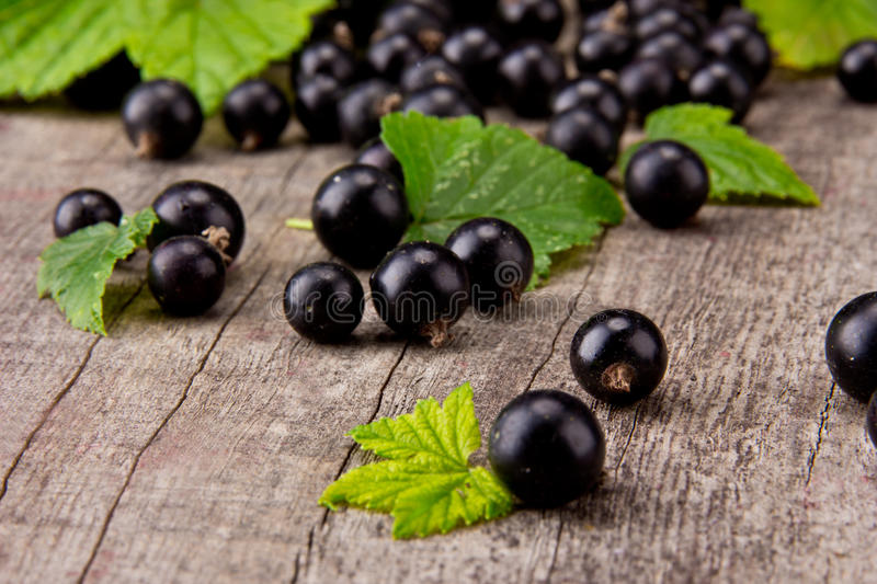 Black currant. Fresh black currant on wooden planks stock images
