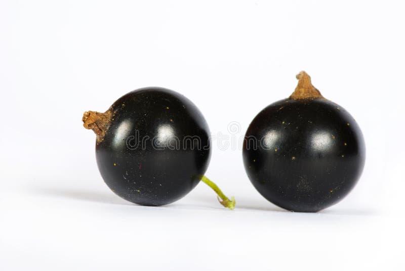 Black currant stock photo