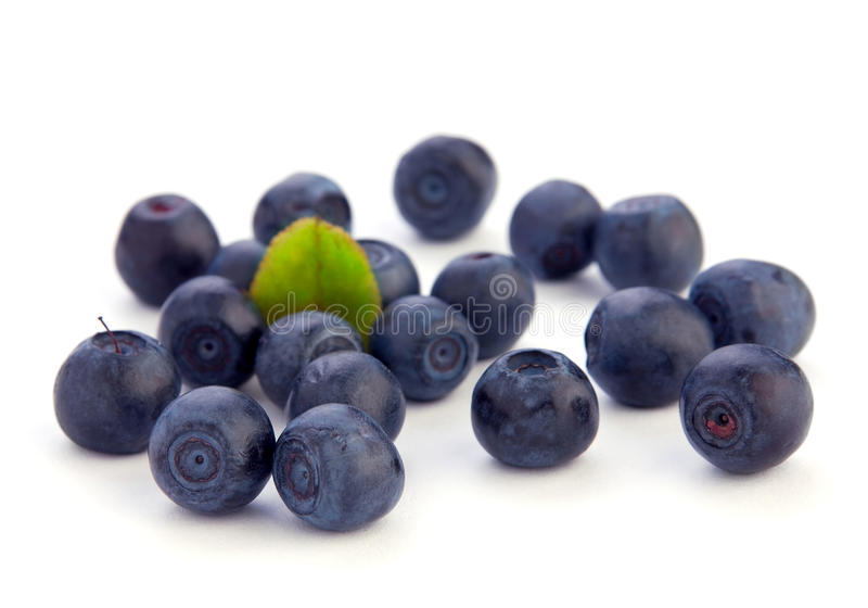Download Black currant berry stock photo. Image of black, green - 26124644