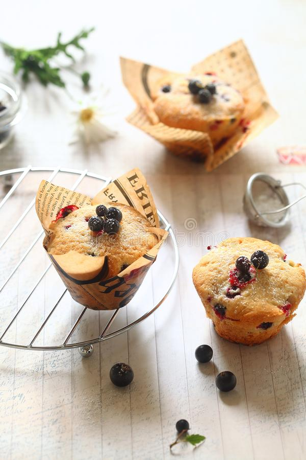 Black Currant Cakes in paper cups stock photography