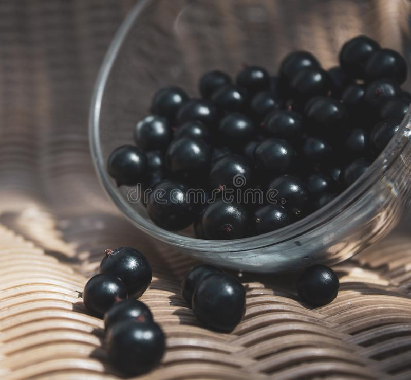 Black currant close-up in a transparent cup. There is a place for text, copy space. royalty free stock photography