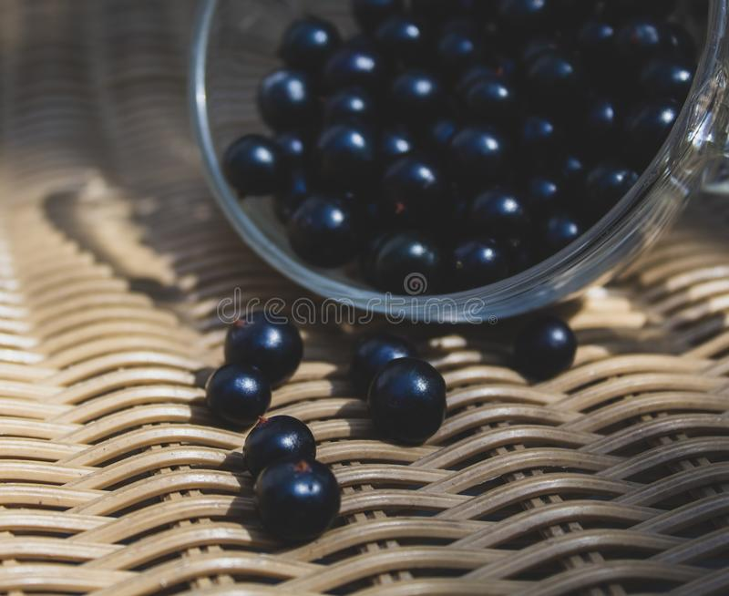 Black currant close-up in a transparent cup. There is a place for text, copy space. stock images